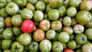 evde-yesil-domates-tursusu-nasil-yapilir2